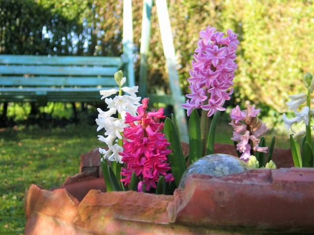 Fresh spring flowers in damaged pot