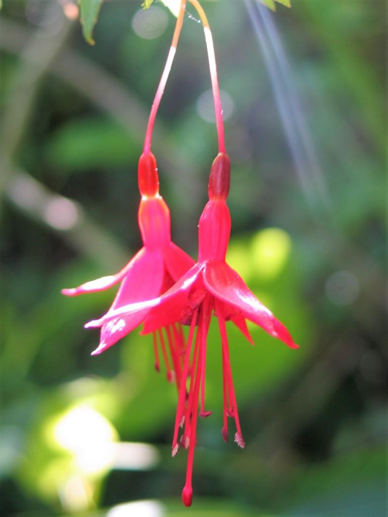 garden impression - flower