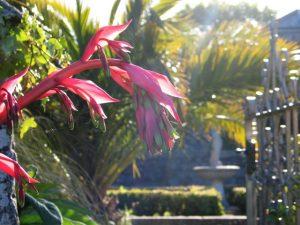 Garden season - palms and flowers