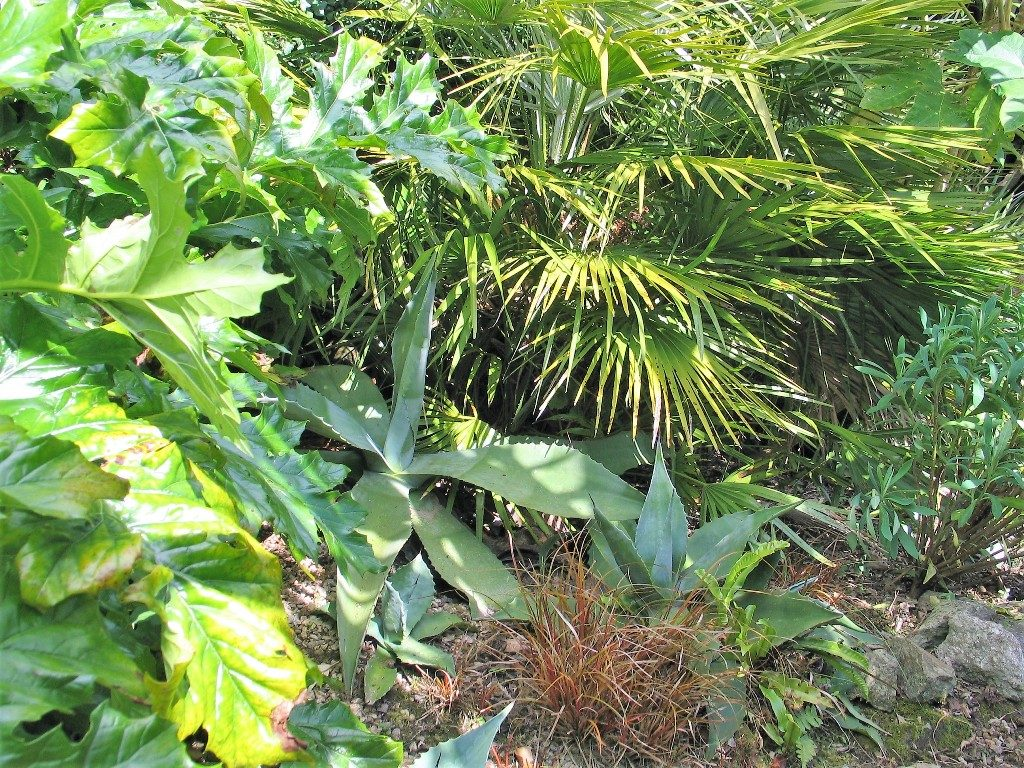 Sub tropical planting -summer garden