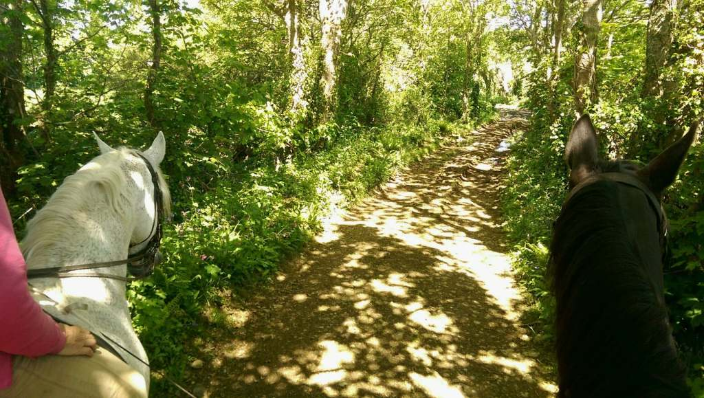 Springtime in Cornwall brings verdant shadows on a cornish lane