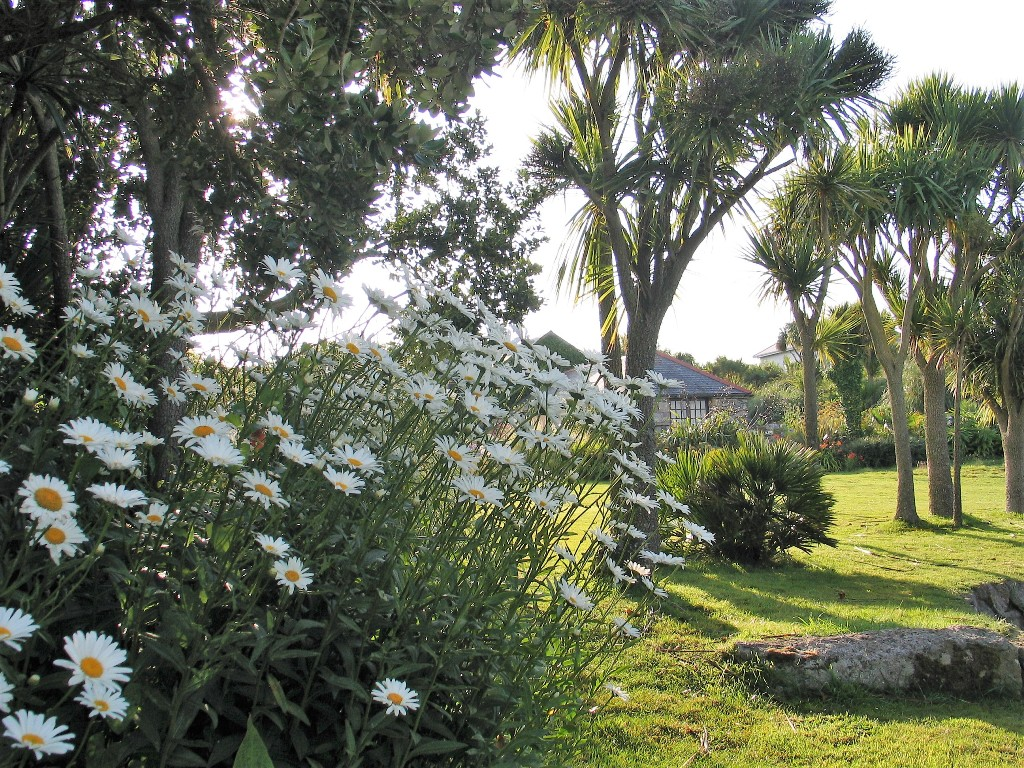 Daisies and palm trees in garden landscape - July Garden diary