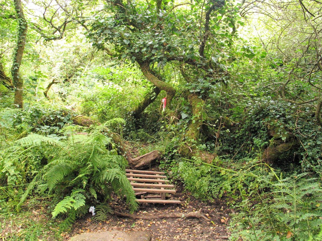 A narrow pathway leading into denser woodland to reach Madron sacred Well