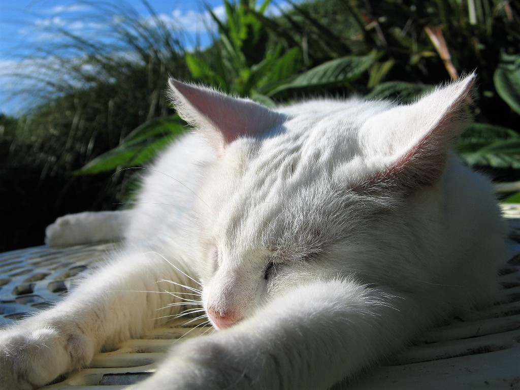 Cat sleeping in summer sunshine