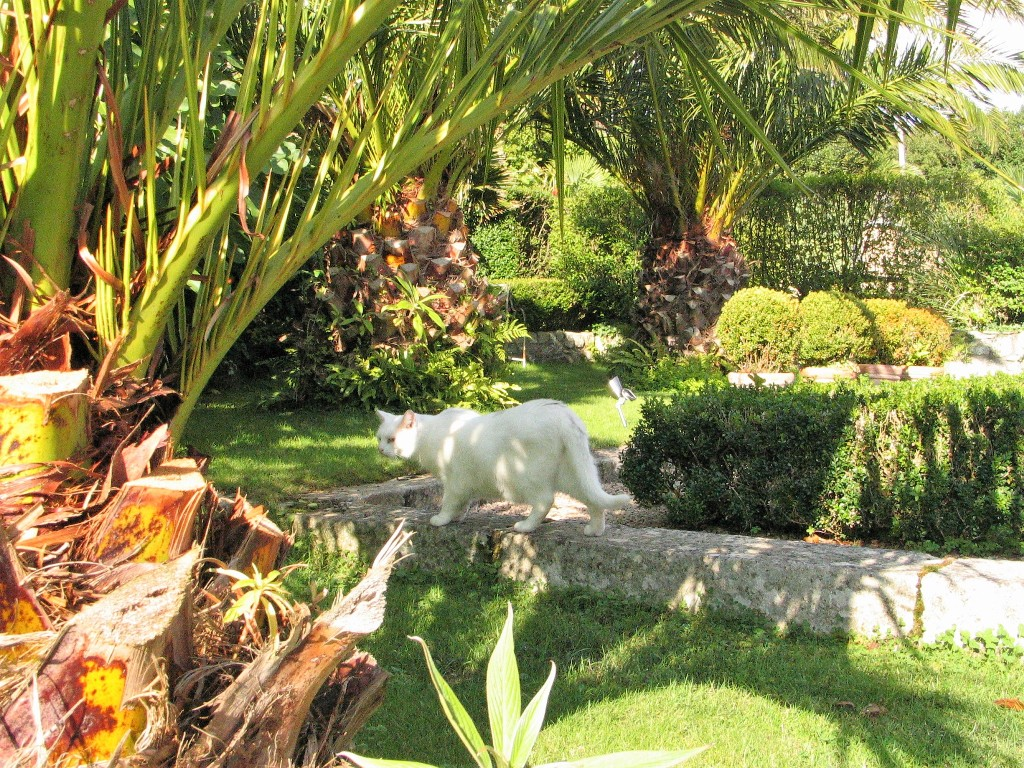 August - high summer in the garden and a cat prowls through palm trees