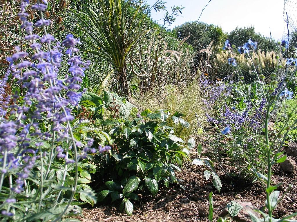 Herbacious prairie style planting