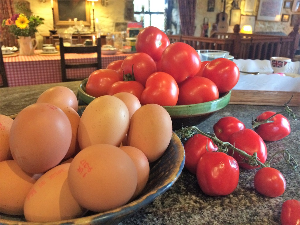 Free range eggs and freshly grown tomatoes - breakfast at Ednovean Farm