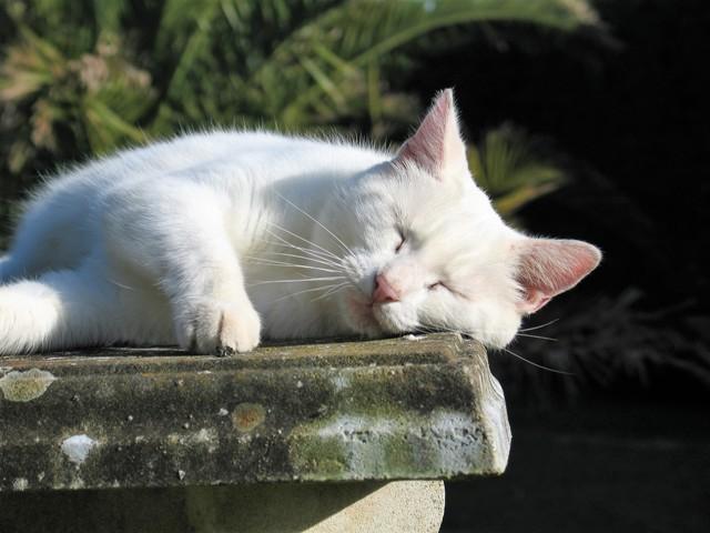 Cat home worker