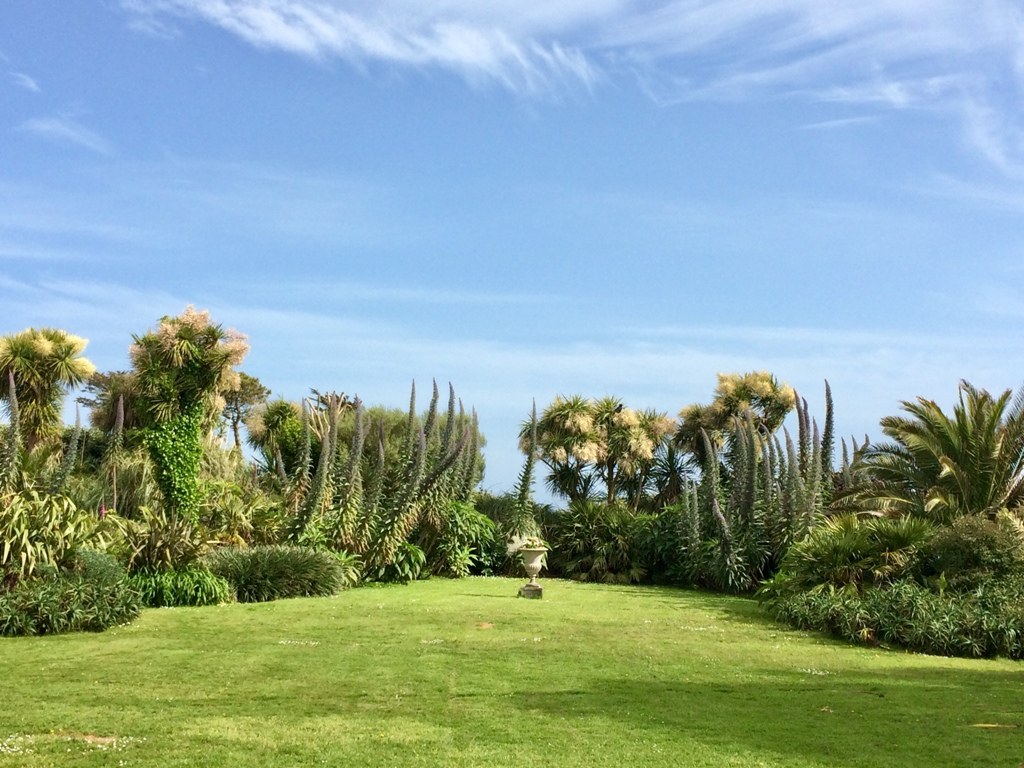 Echiums subtropical spires of flowers in the May garden at Ednovean Farm