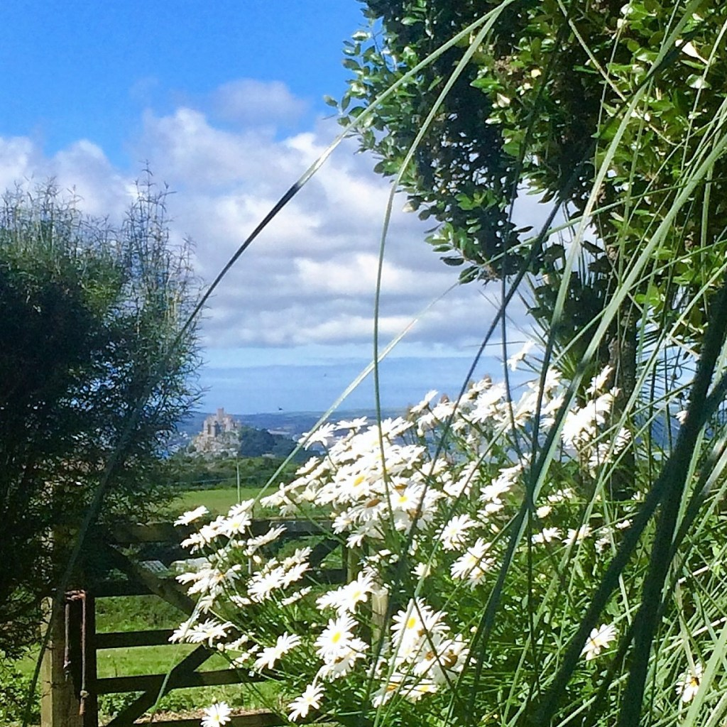 Garden daisies and St Michael's Mount