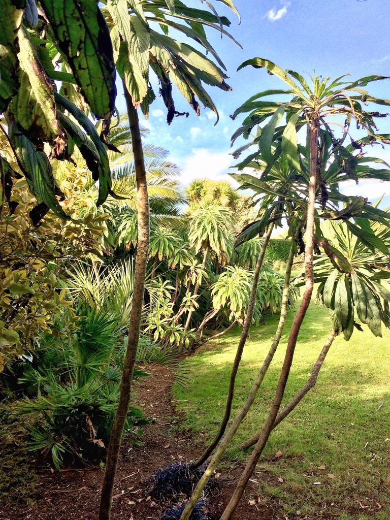 Sub tropical borders - news from Ednovean garden diary