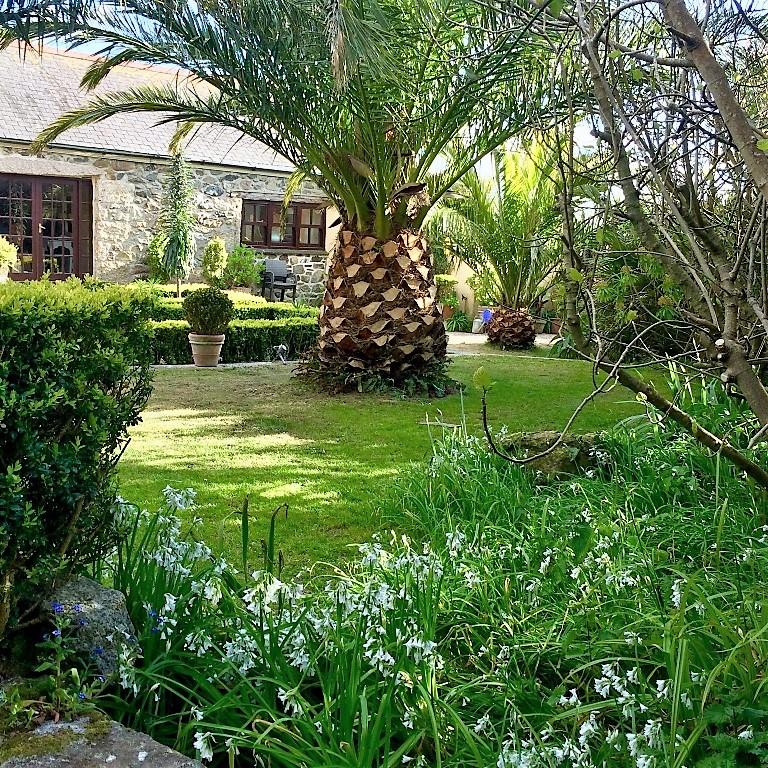 Wild garlic under the hedges in the springtime Ednovean Courtyard