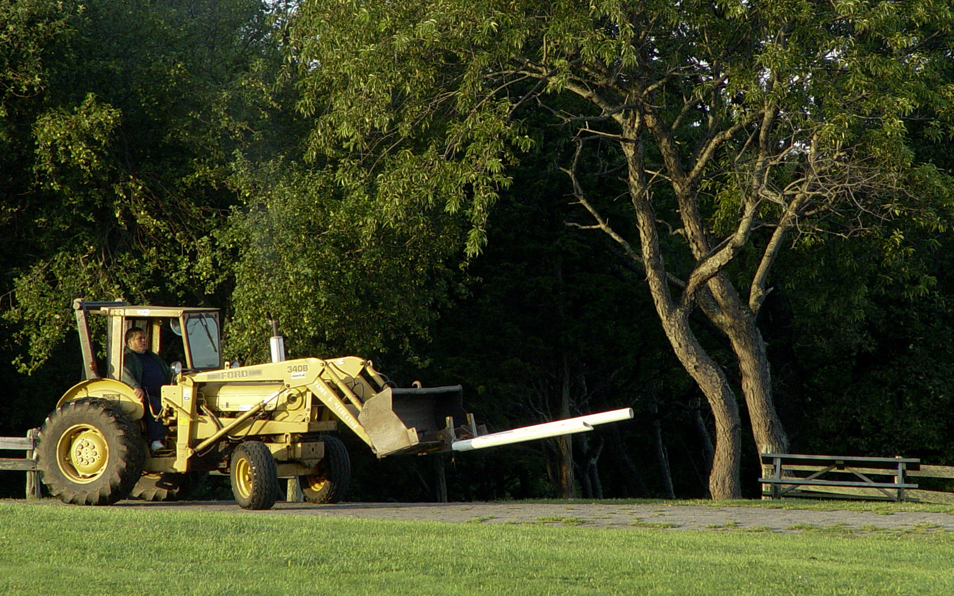 Park Bench Wrangler approaching a stray