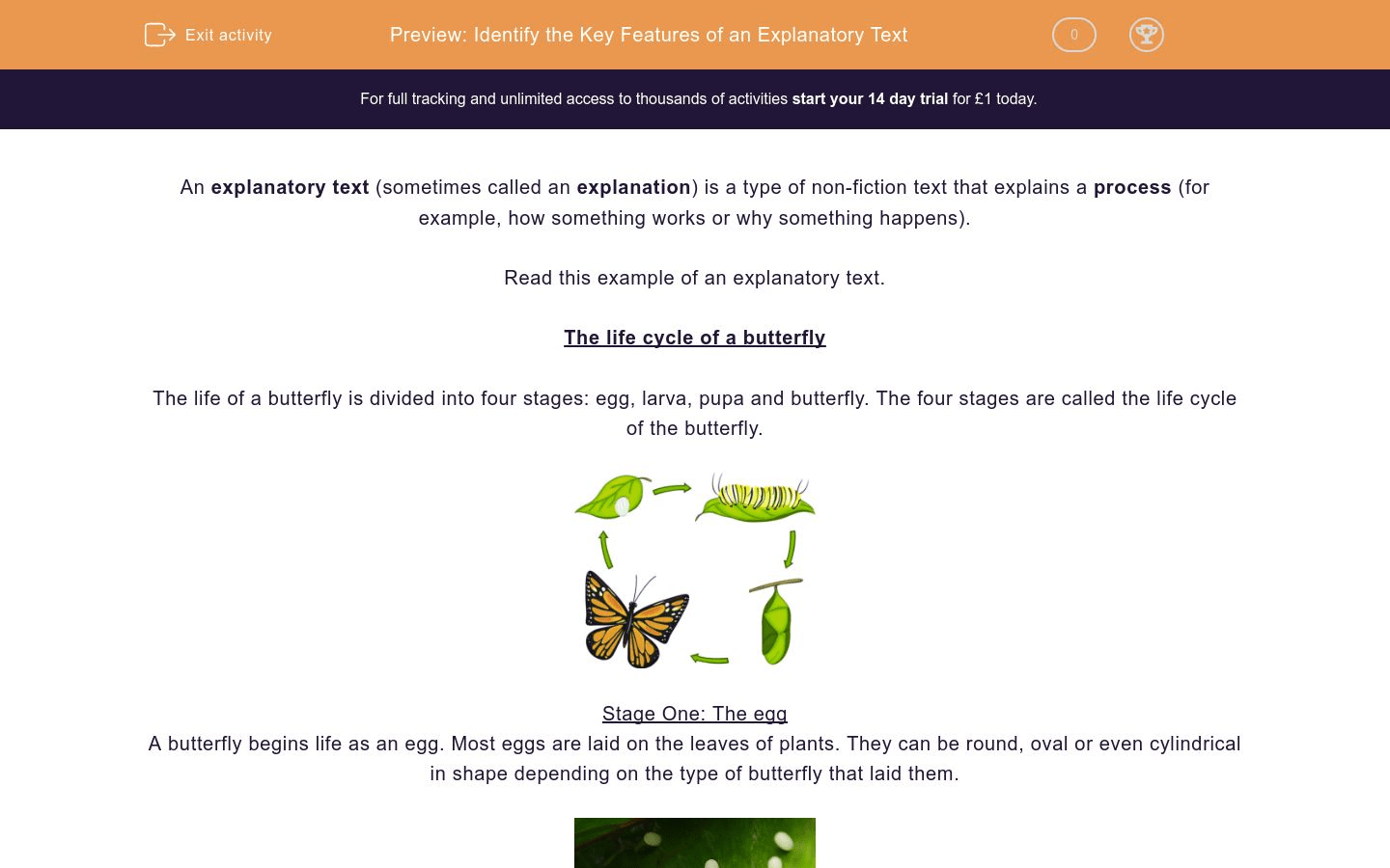 Luthfiannisahay Metamorphosis Of Butterfly Explanation Text