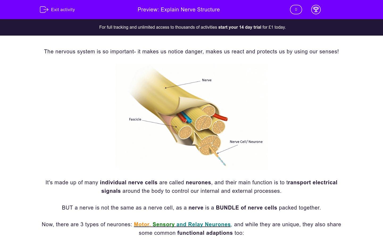 Explain Nerve Structure Worksheet
