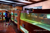 aquariums residence inn