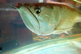 fish residence inn zoo