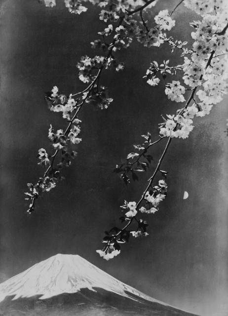 Cherry blossoms, moon and Mt. Fuji
