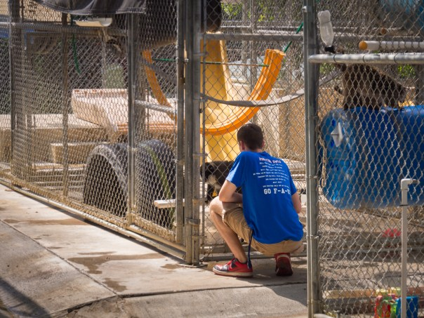 Volunteer caring for residents at the Suncoast Primate Sanctuary
