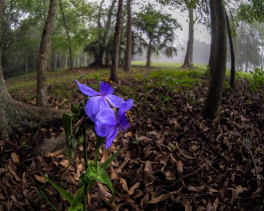 Flowers in the forest by the footpath in the fog