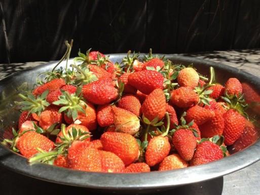 strawberries phoenix garden