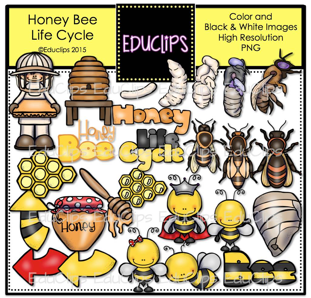 Honey Bee Life Cycle Clip Art Bundle Color And B Amp W