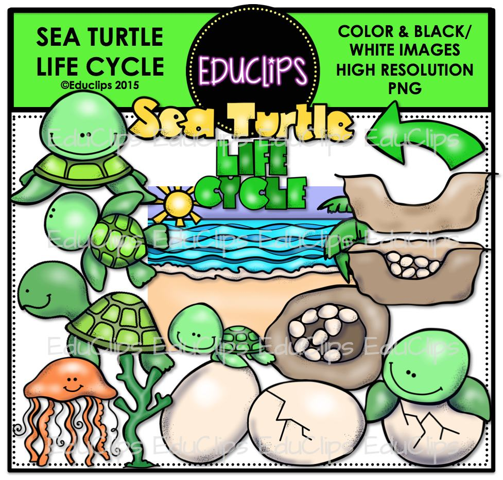 Sea Turtle Life Cycle Clip Art Bundle Color And B W Edu Clips