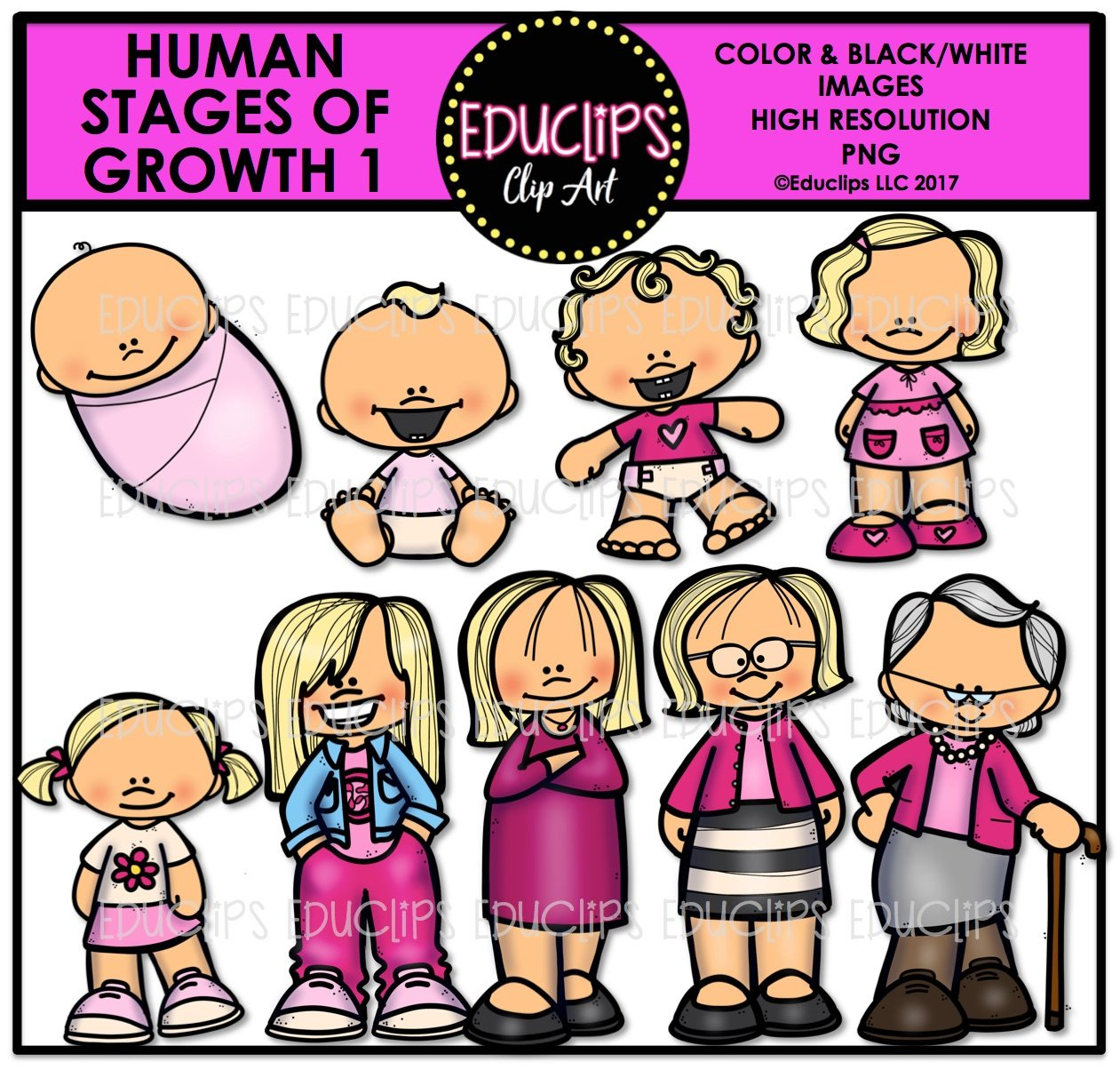 Human Stages Of Growth 1