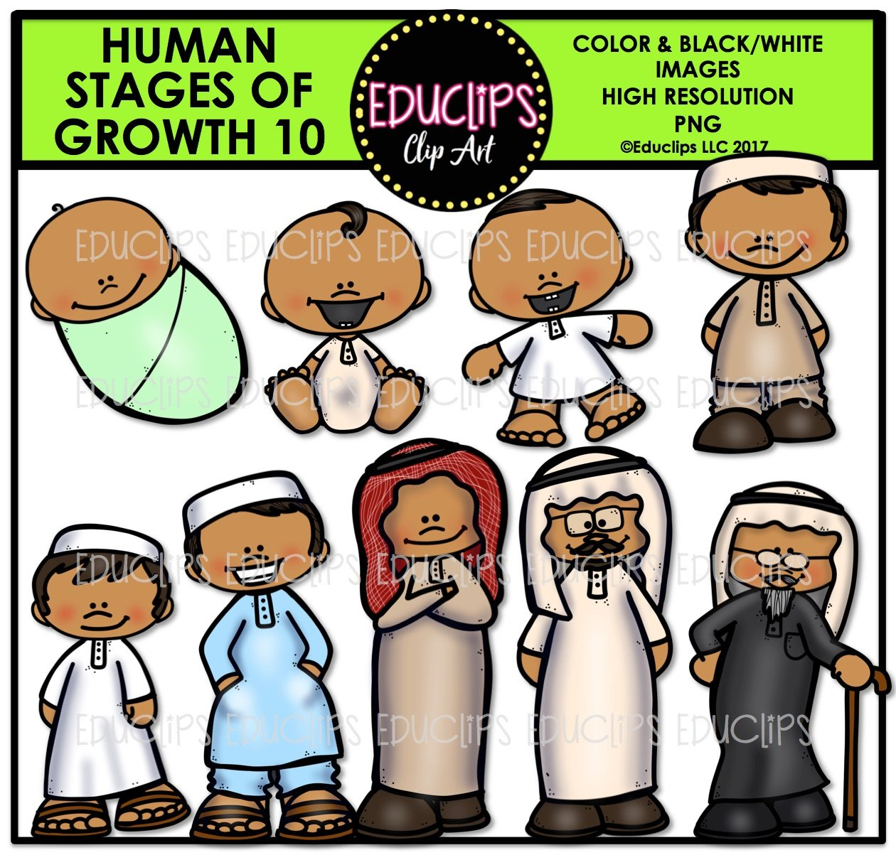 Human Stages Of Growth 10