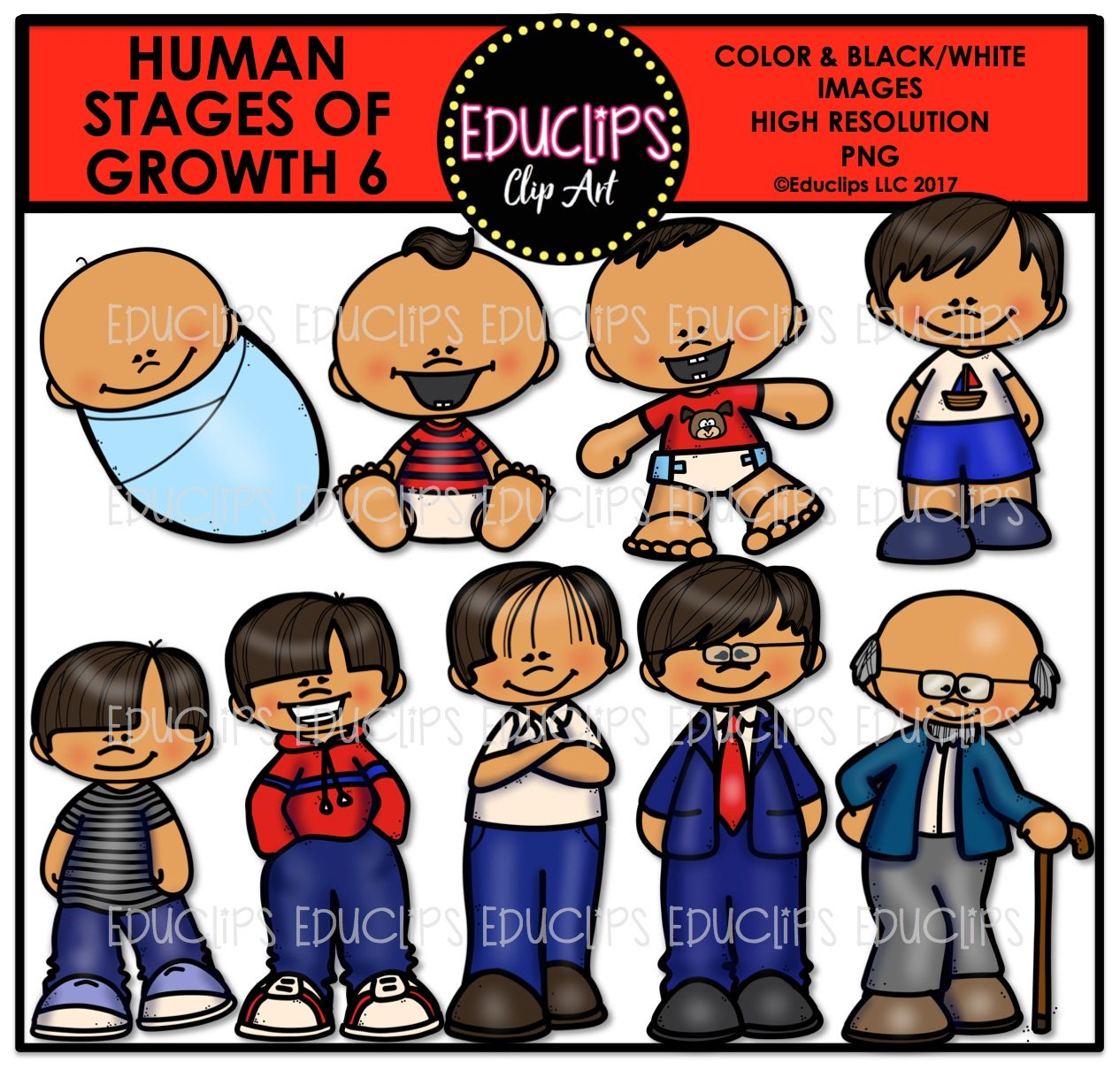 Human Stages Of Growth 6