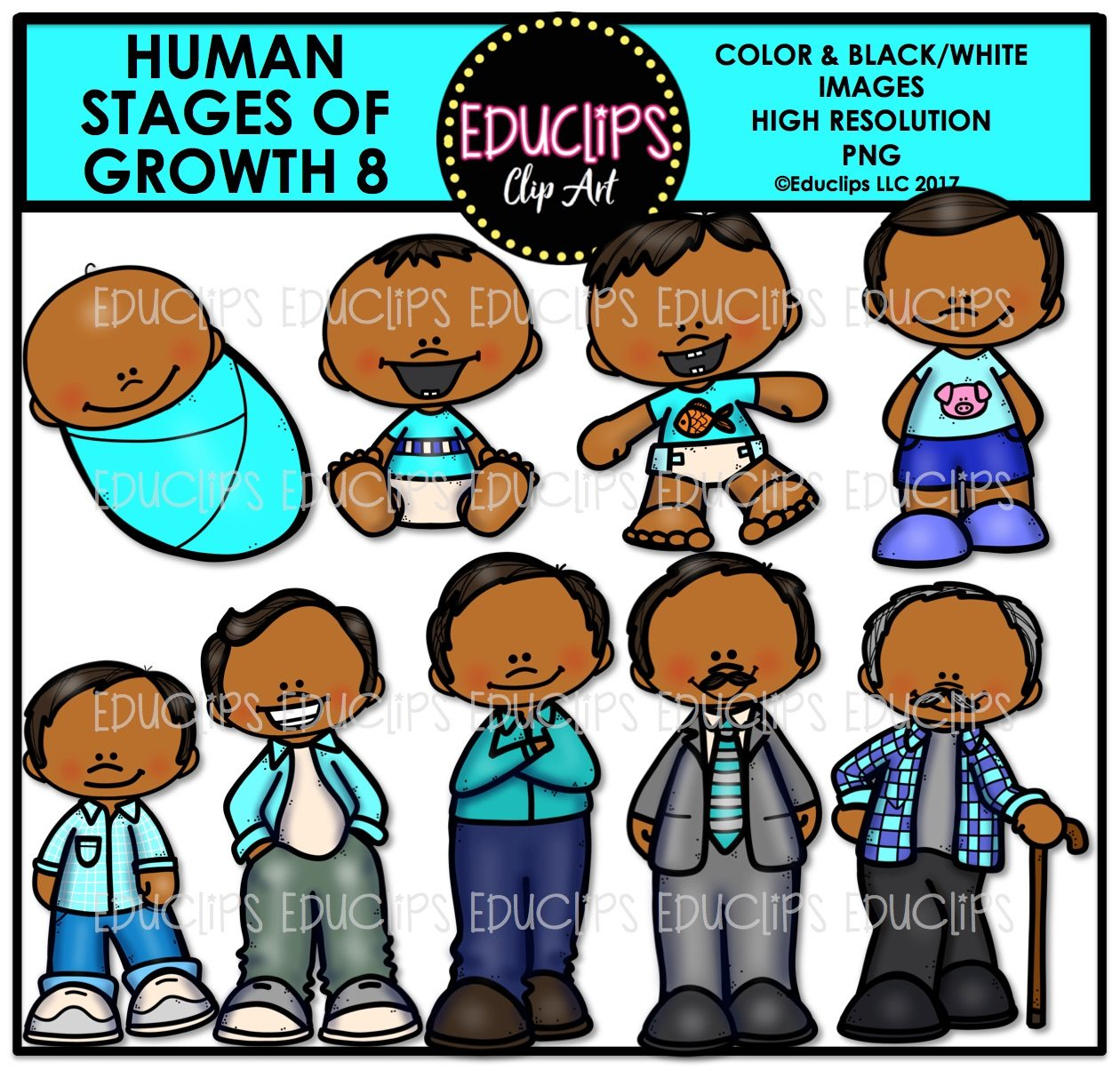 Human Stages Of Growth 8