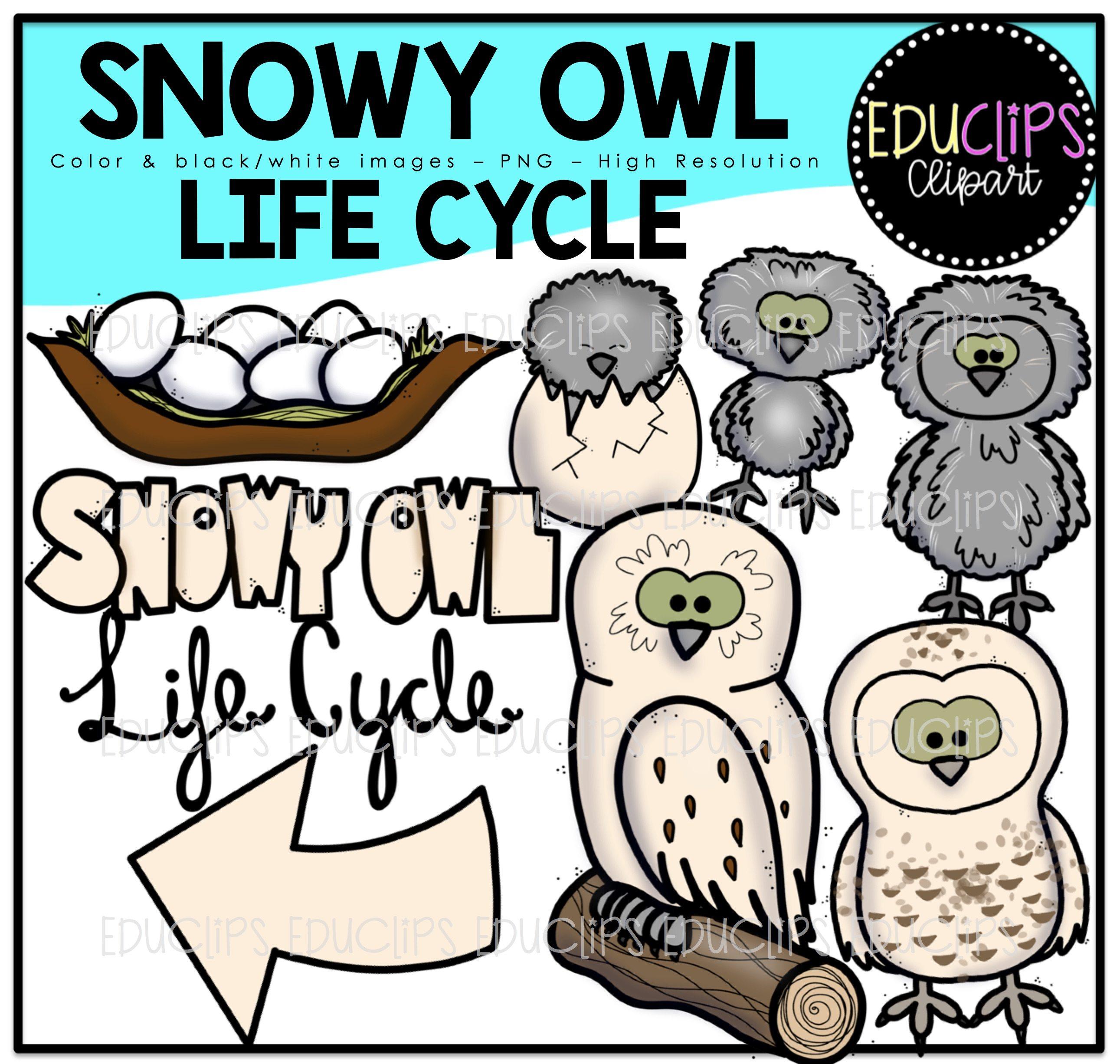 Snowy Owl Clip Art Bundle Color And B Amp W