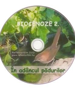 RV2 DVD R 3