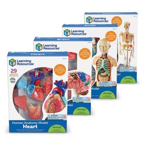 3338 anatomy set box nbr cnt sh 2