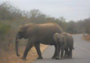 Kruger 6 ago 38
