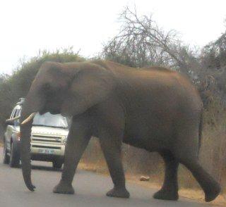 Kruger 6 ago 52