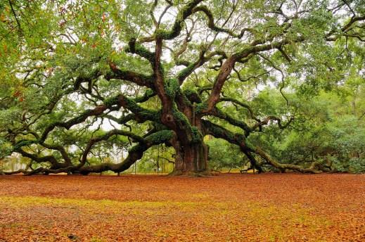 photo-arbre