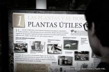 Plantas útiles para el hombre