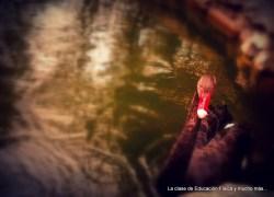 ¿El cisne del estanque?