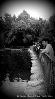 El pequeño estanque, otro de los descubrimientos