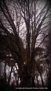 Árboles con muchos años de vida