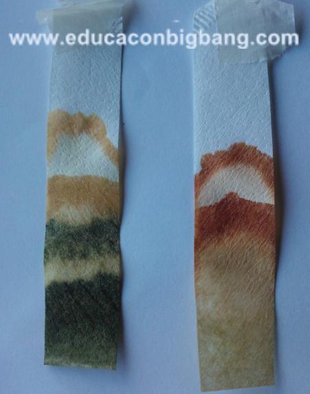 Papel de filtro con los pigmentos de las hojas