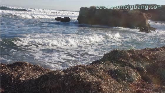 Playa protegida por posidonia azotada por las olas.