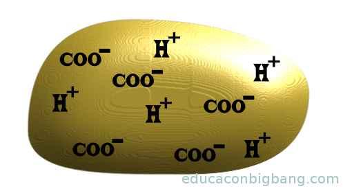 iones en la patata