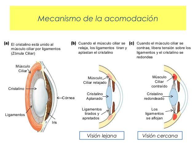 Desenfoque   en Educando tu mirada   Centro de optometría y terapia visual en Valencia