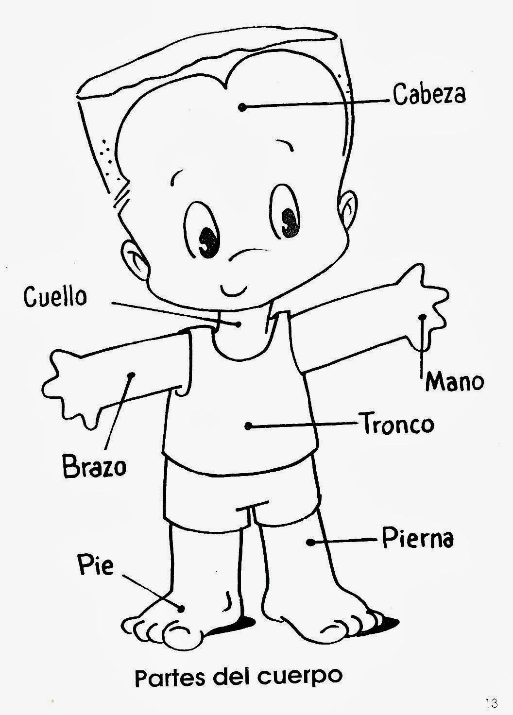 Las Partes del Cuerpo para niños | Material para maestros ...