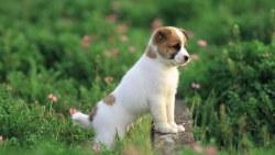 Como educar a un perro cachorro