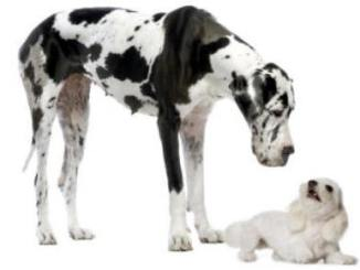 como presentar un cachorro a un perro adulto