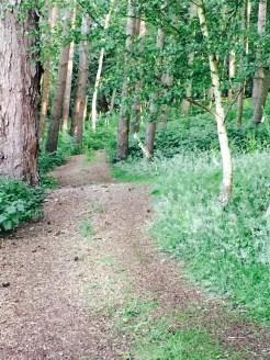 The woodland path