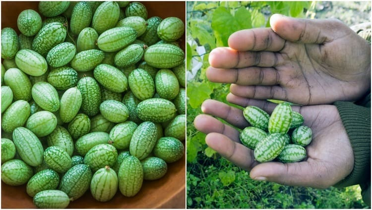 cucamelons